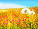 spring-scene-wallpapers-t